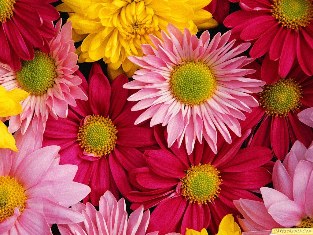 Fondos de Flores de pascua con velas | Fondos de pantalla