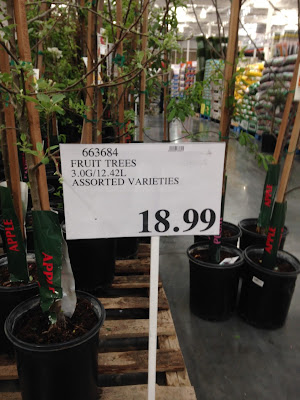 Assorted Varieties of fruit trees - plum and apple at Costco