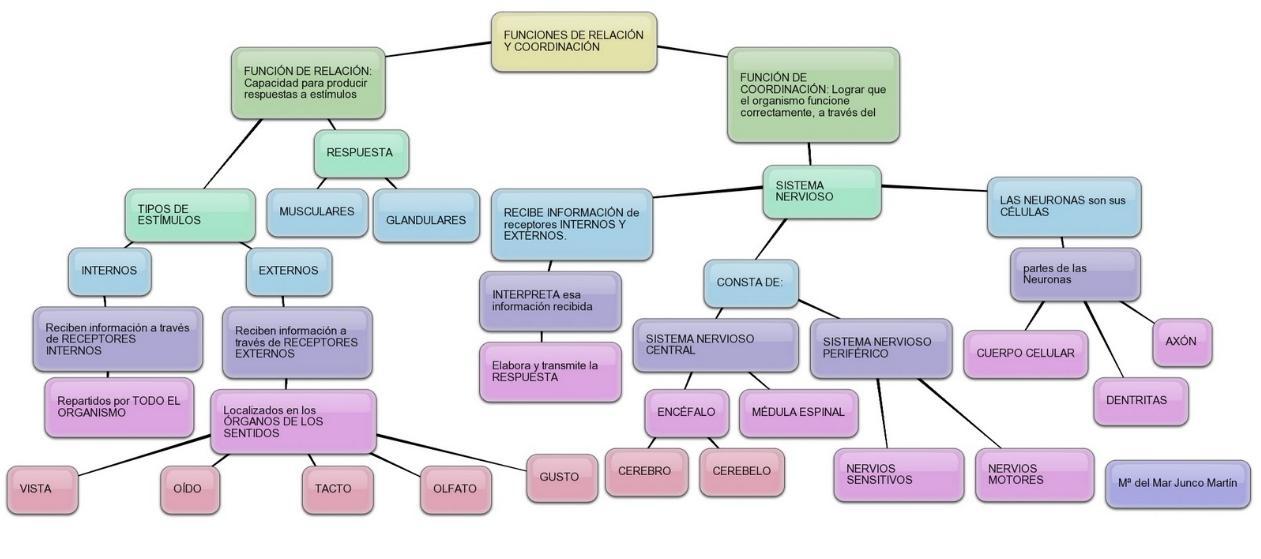 RINCÓN DE CLASE: MAPA CONCEPTUAL FUNCIONES DE RELACIÓN Y COORDINACIÓN