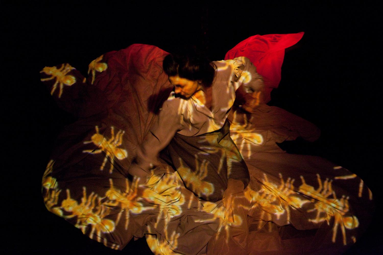 Diapasones harmónicos pitagóricos con imágenes de rosas  - Imagenes De Rosas Que Se Mueven