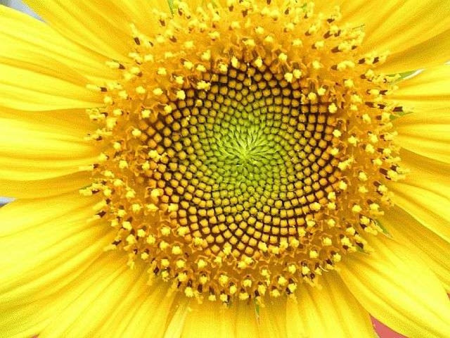 La simetría en la naturaleza