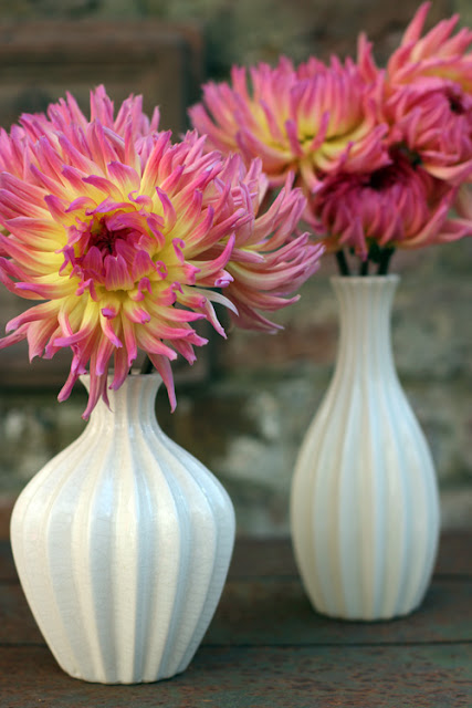 Pink and yellow Dahlia in white vases