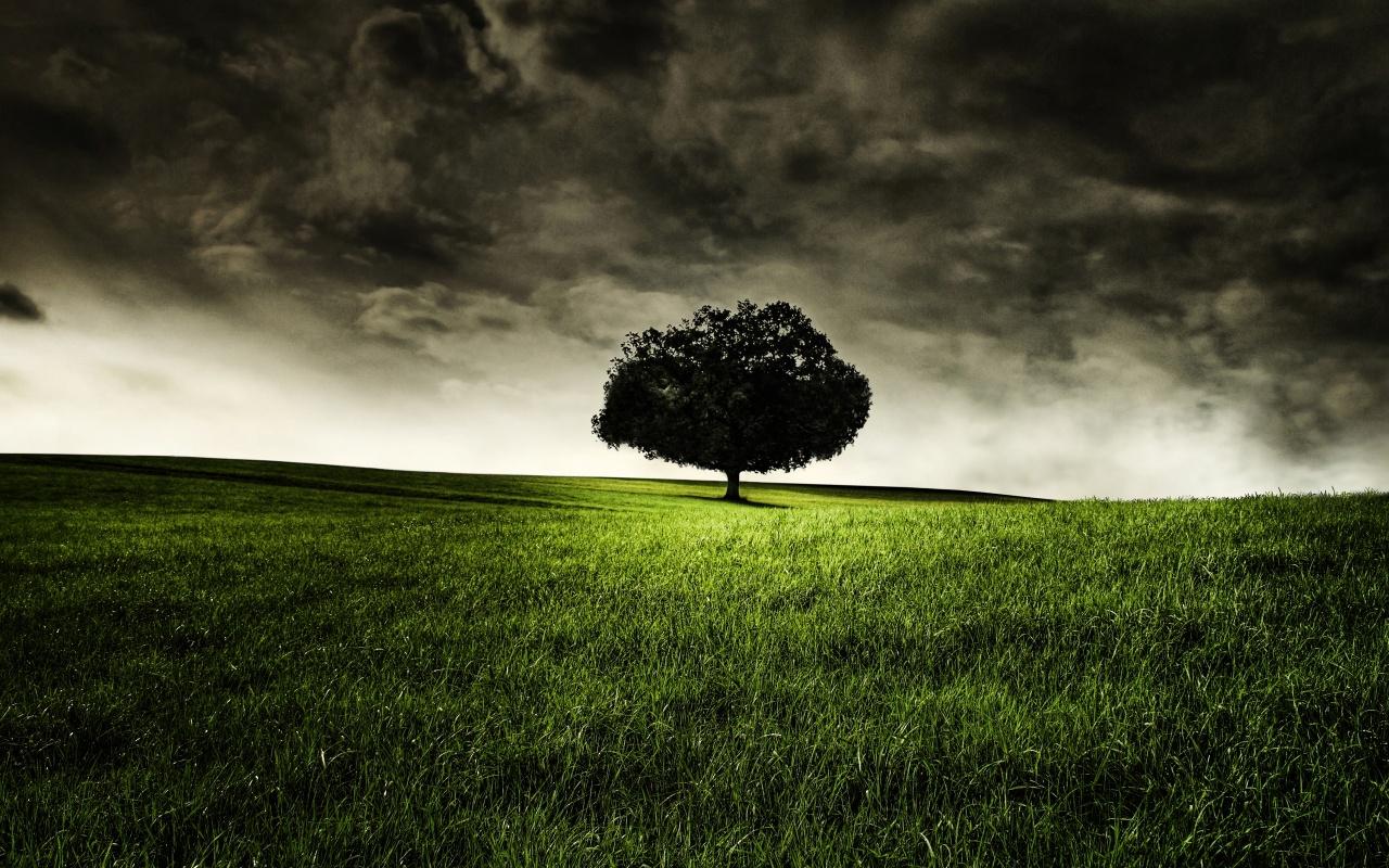 http://4.bp.blogspot.com/-umdnWcj-3ug/TntIQuxk83I/AAAAAAAAAcs/XOG195bDnGg/s1600/nature-alone-wallpaper.jpg
