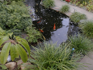 Koi Pond, Photo by Kaliani Devinne, Copyright 2013
