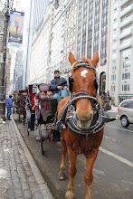 Häst & Vagn i Central Park