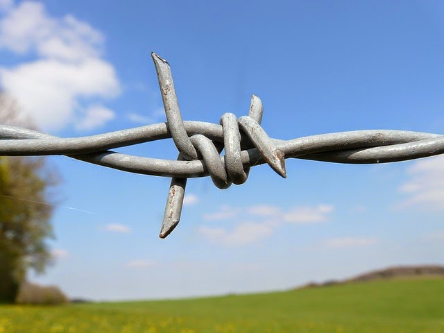 Barbed Wire link