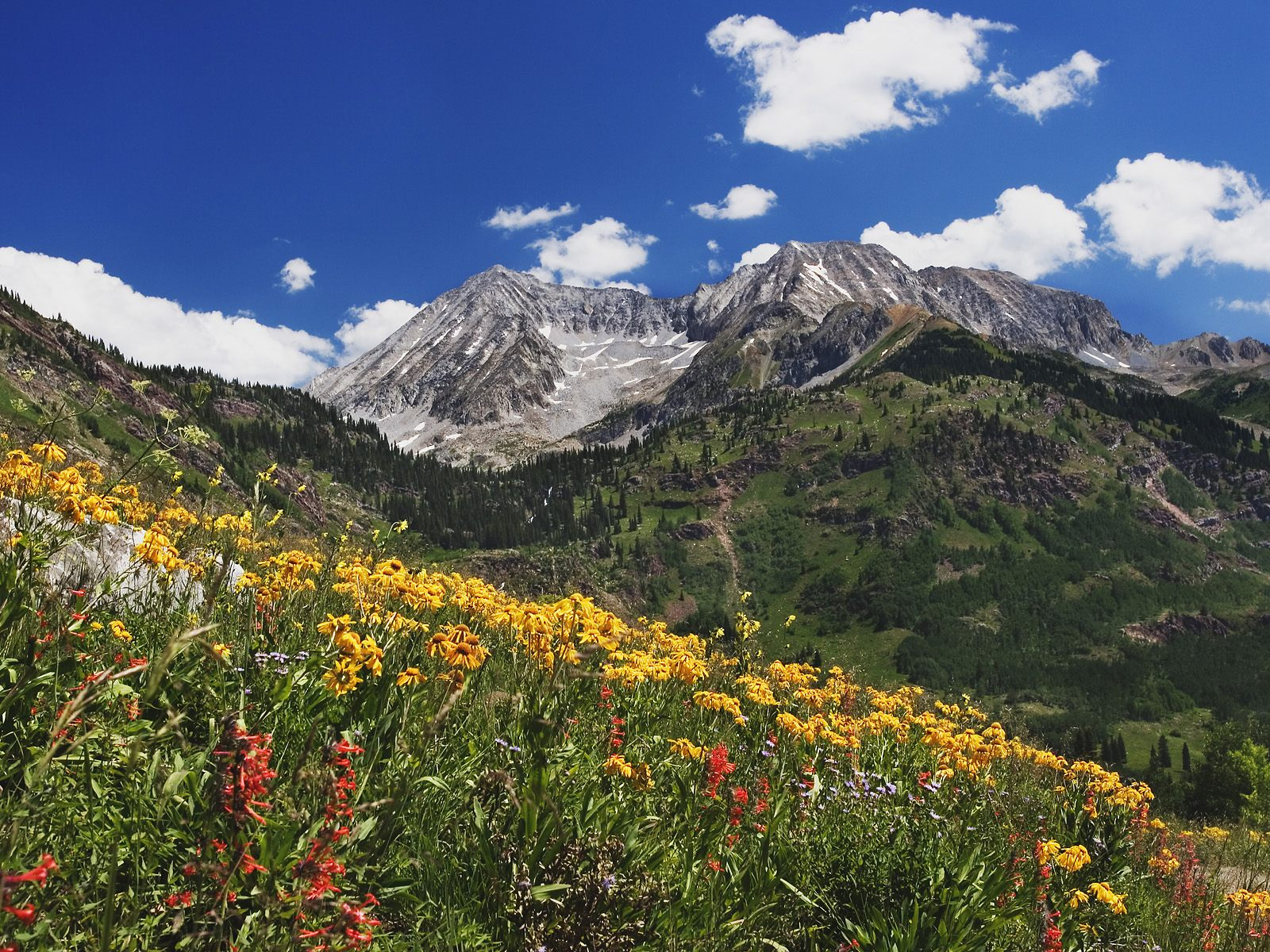 http://4.bp.blogspot.com/-un3A6xsPhNk/TbW1aXhXp8I/AAAAAAAACl4/AdhuH1H44Dw/s1600/Spring_Wildflowers_in_Alpine_Meadow_at_Lead_King_Basin.jpg