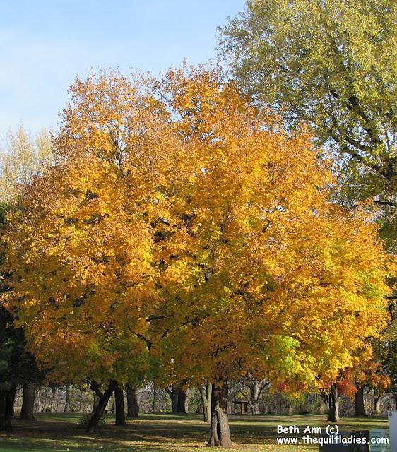 Single Tree in Fall Color photo by Beth Ann Strub