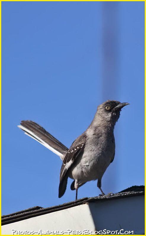 http://4.bp.blogspot.com/-unRgoFUjNek/Tt-PypNYpYI/AAAAAAAACkA/ESGjm8t737g/s1600/wild%2Bbirds.jpg