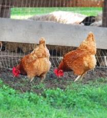Fraker Farm Pest Control