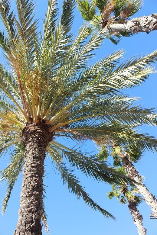 palmera bonita