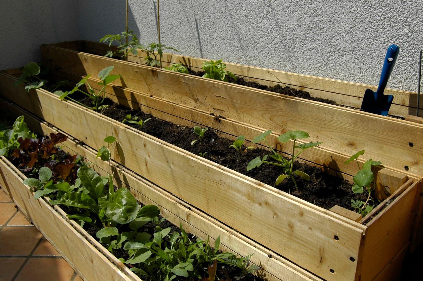 ridiventare grandi orto sul balcone