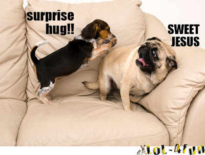 Funny dogs playing on couch