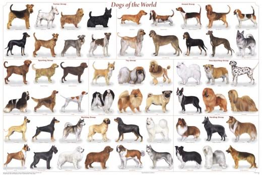 Names Of Dog Breeds Vs Names Of Cat Breeds
