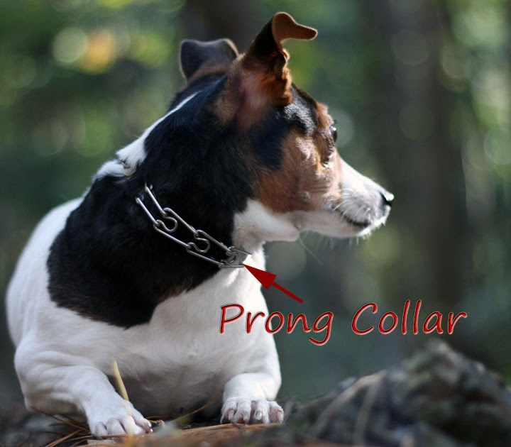 Dog Training Ontario