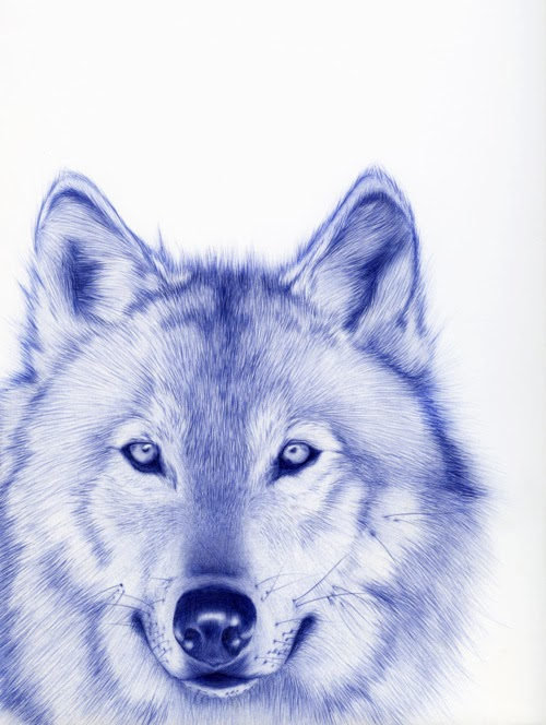 17-Wolf-Sarah-Esteje-ABADIDABOU-Hyper-realistic-Ballpoint-Pen-Animals-www-designstack-co