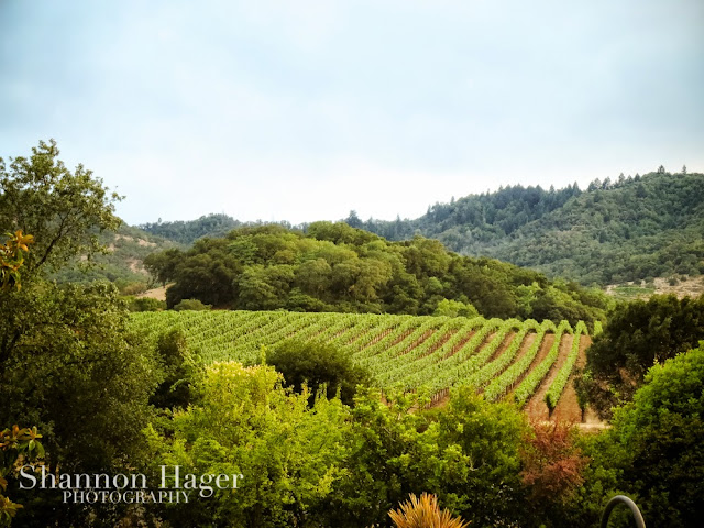 Shannon Hager Photography, Napa Valley, Vineyards
