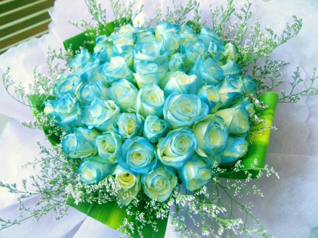 Hình ảnh hoa hồng xanh lãng mạn