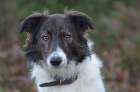 Glade Gimli, Bent's nye hund