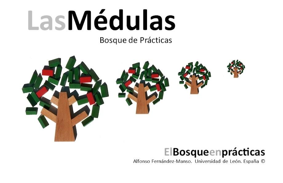 elbosqueenpracticas-lasmedulas