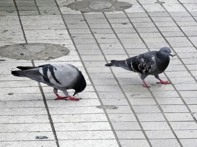 鳩,鳥,新宿駅〈著作権フリー無料画像〉Free Stock Photos