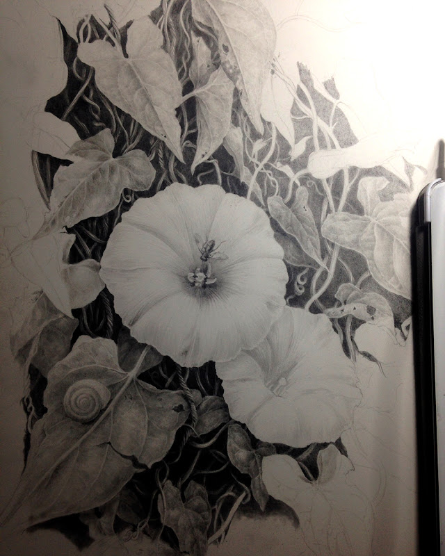 Worki in progress photograph of bindweed drawing