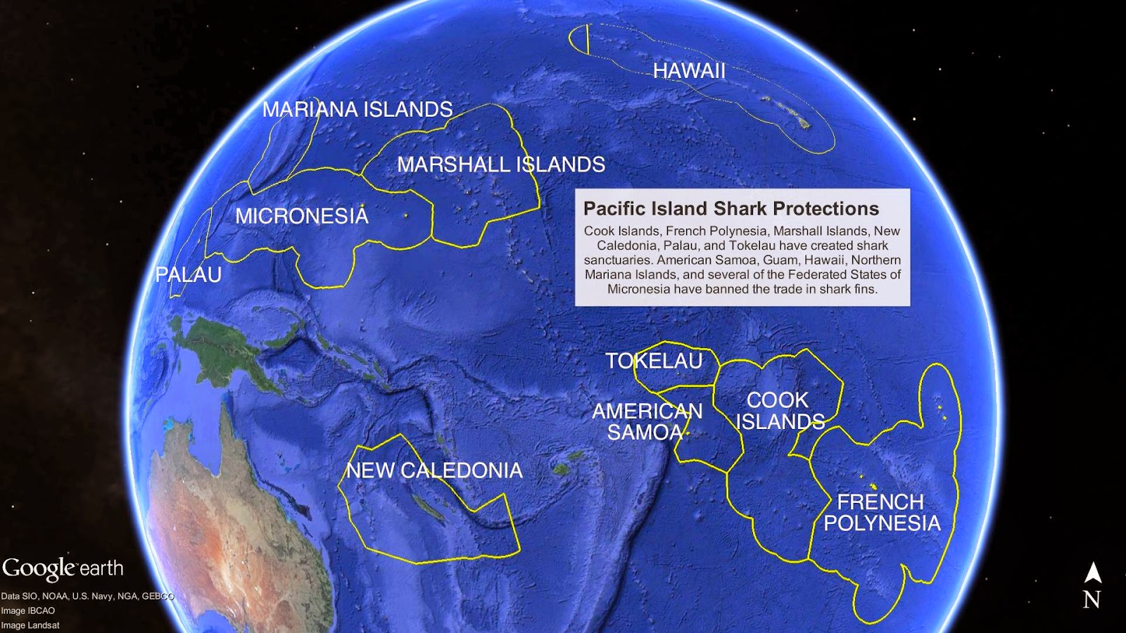 Shark Defenders