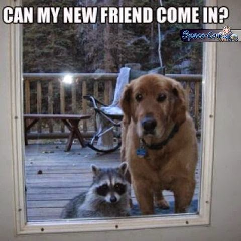 funny animals pics humor