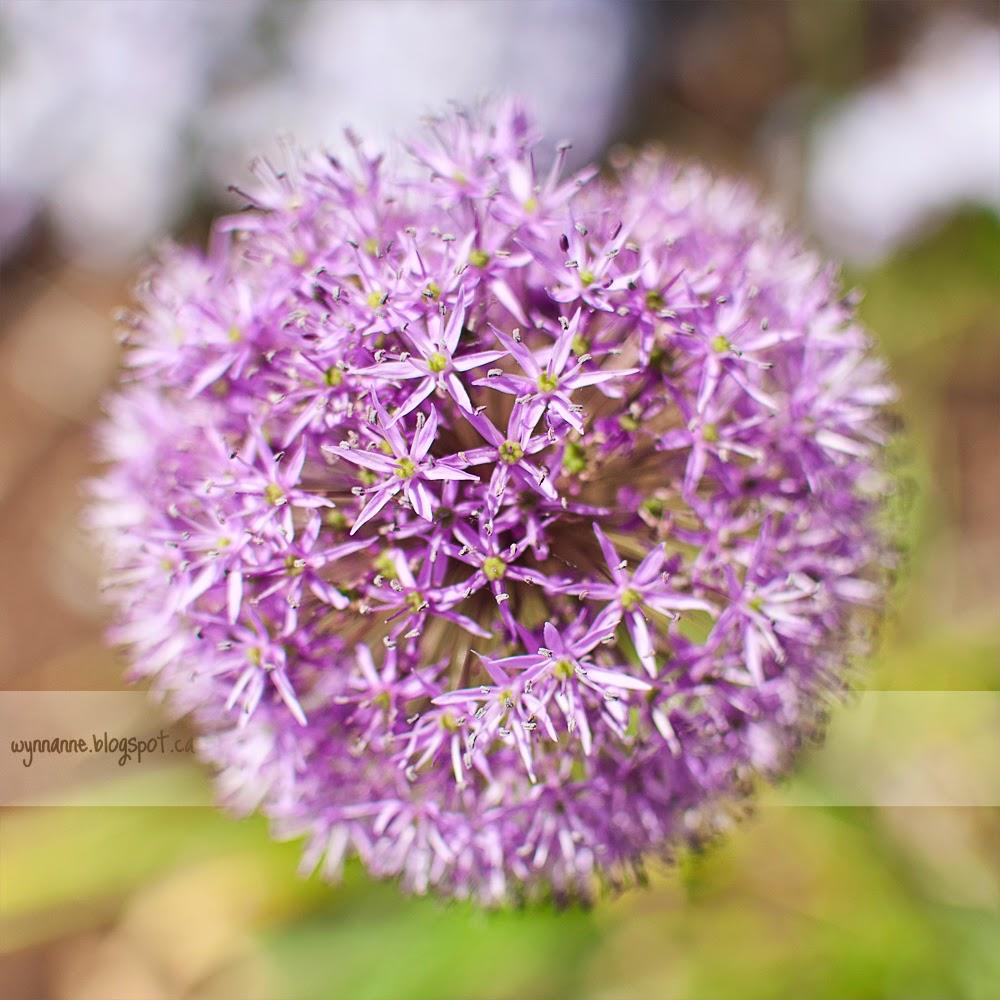 Garden Fantasy | Wynn Anne's Meanderings