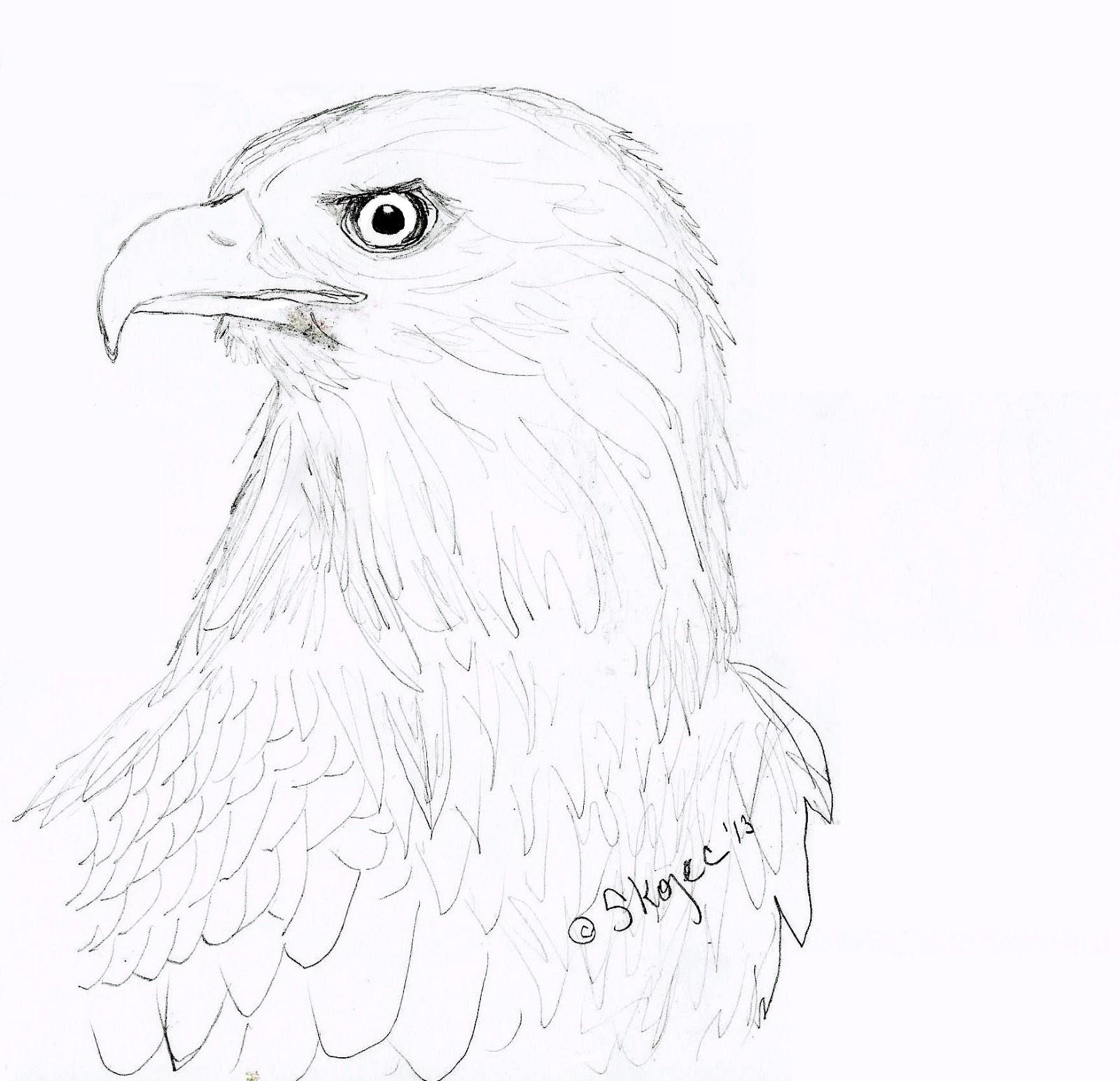 Draw an Eagle | Art Class Ideas