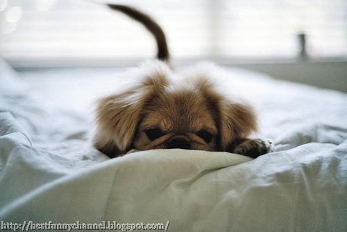 Cute small dog.