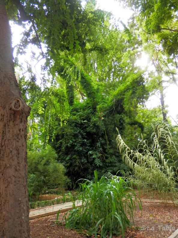 Bamb gigante en el jard n bot nico de valencia for El jardin del gigante