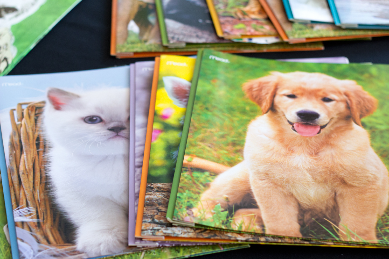 cute-notebook, cats-and-dogs