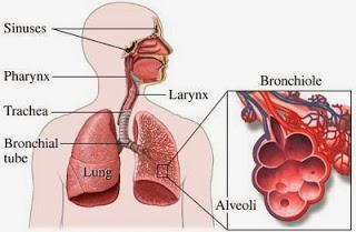 Obat Tradisional Infeksi Saluran Pernafasan