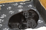 Onze pups