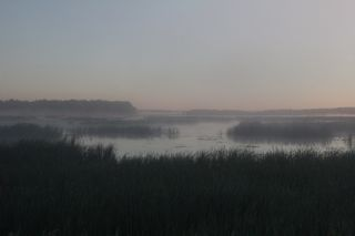 photo of misty morning on the river