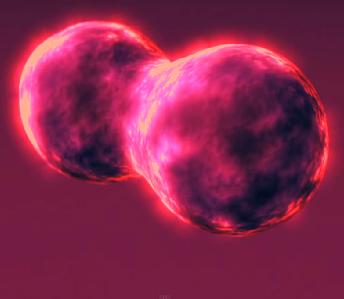 células estaminais de um animal vivo