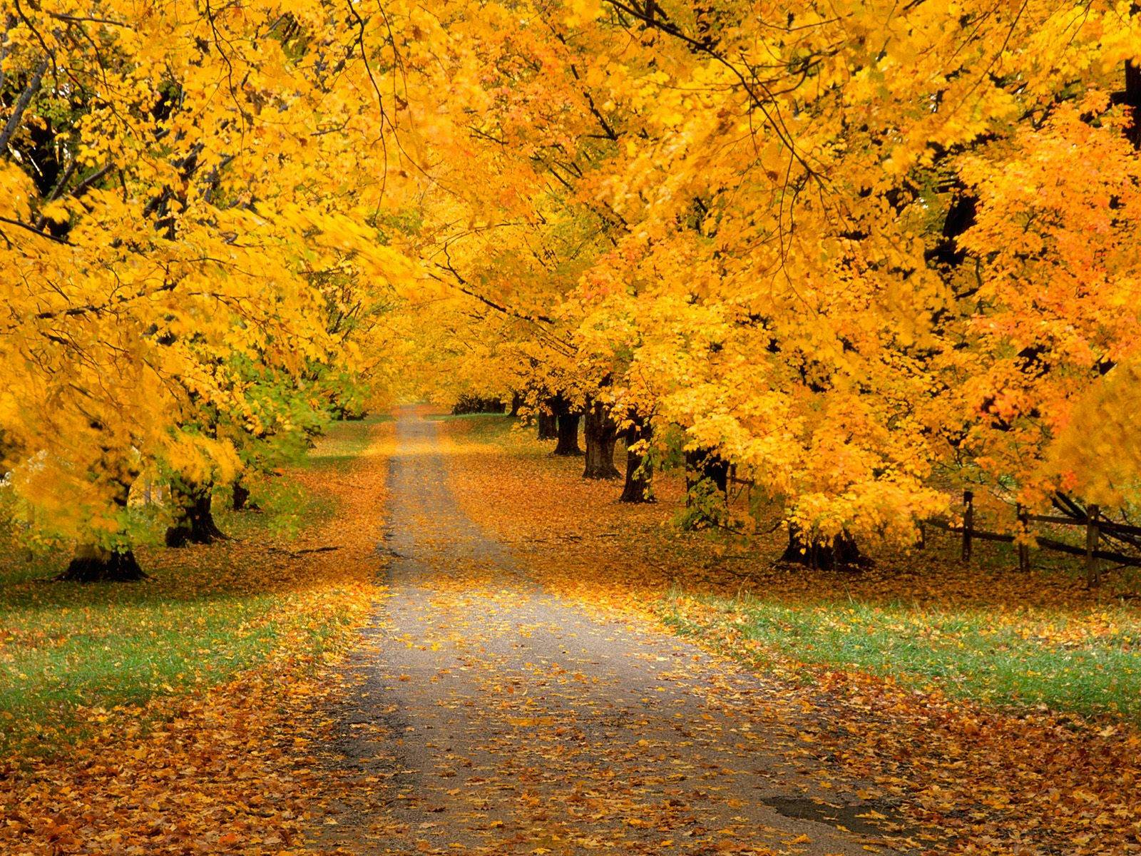 http://4.bp.blogspot.com/-usfmw5XtvwA/TwVNyg2SfpI/AAAAAAAAGZw/2Kaz5kATu5Q/s1600/autumn_covered_road.jpg