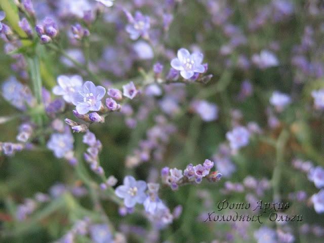 Фиолетовый цвет 4