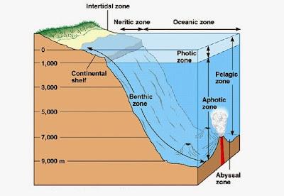 Zona ekosistem laut
