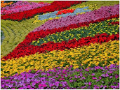 #6 Delightful Flowers Garden Wallpapers