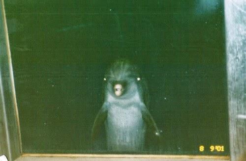 creepy dolphin