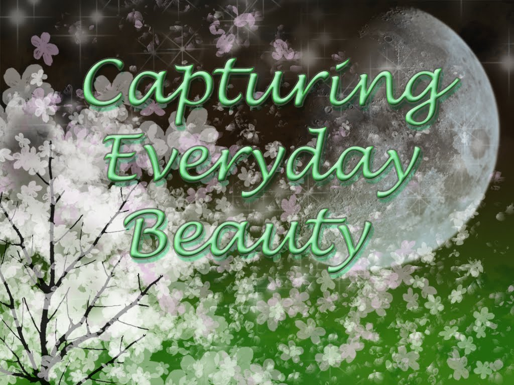 Capturing Everyday Beauty