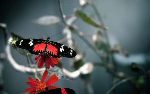 Butterfly Wide Wallpaper full HD