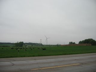 photo of cows, hay and wind turbine in a field