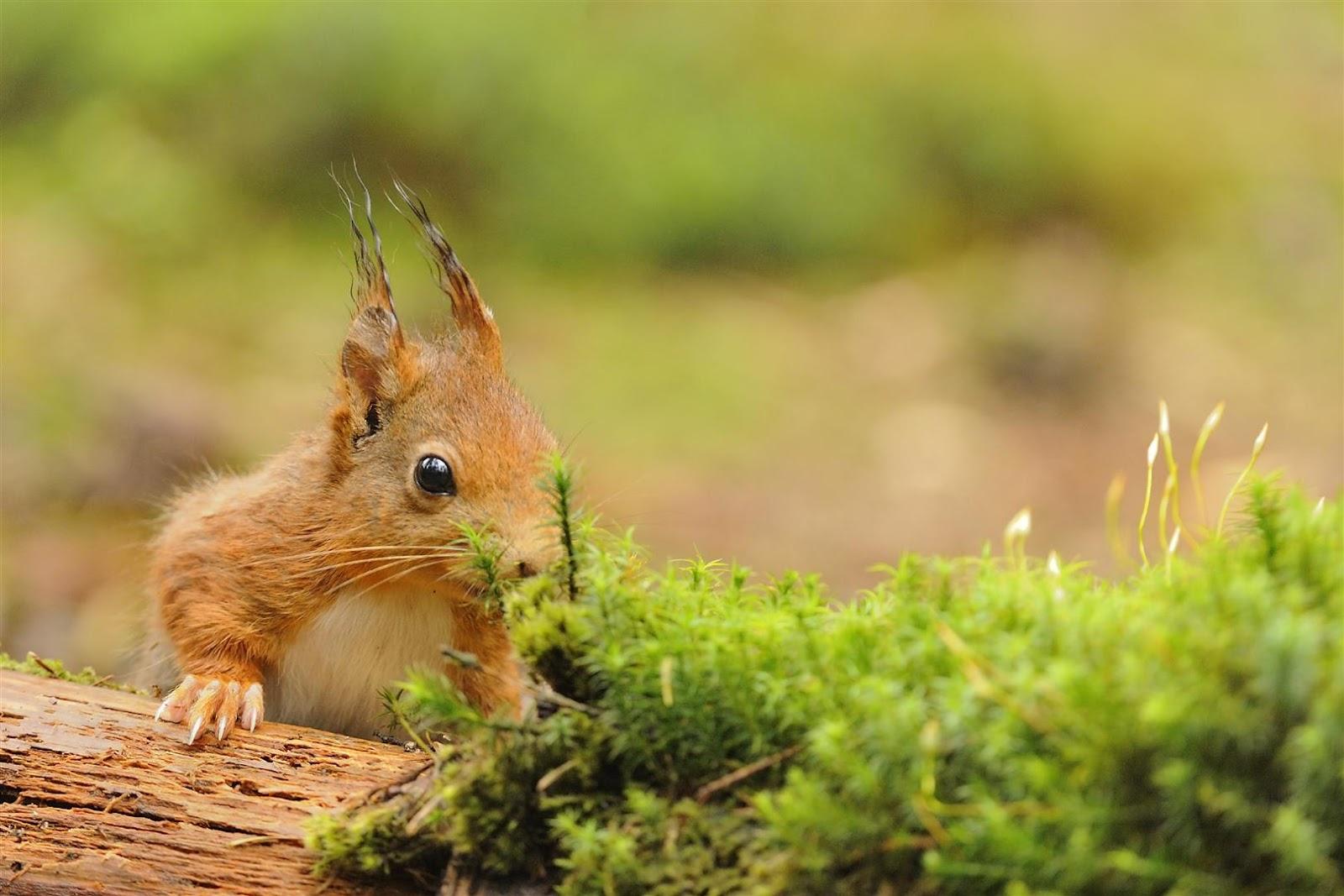 Gonnie van de schans eekhoorntjes 2 2 eekhoorntjes - Een mooie kamer van een mooie meid ...