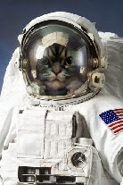 太空貓KK