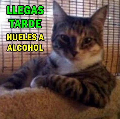 foto-meme-gatos-borrachera