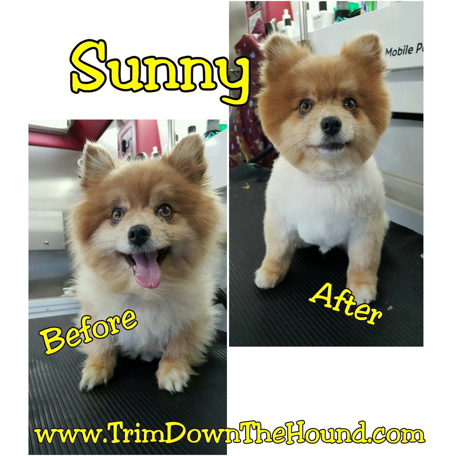 Sunny...Before & After