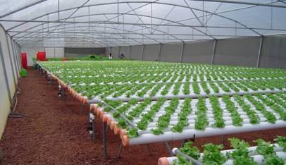 Hidroponia definicion de hidroponia for Construccion de viveros e invernaderos